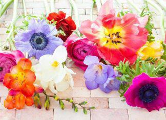 colorful-spring-flowers-PN9TQK3