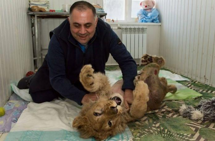lion-cub-broken-legs-rescue_7